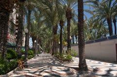 Alineado con las palmeras en la ciudad Imagenes de archivo