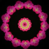 Alinhador longitudinal circular de flores do rosa quente foto de stock royalty free