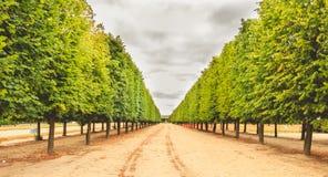 Alinhamento das árvores em um jardim francês imagens de stock royalty free
