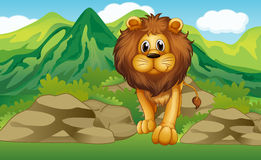 Alion with a mountain scenery at the back Stock Image