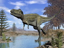 Alioramus dinosaur - 3D render Royalty Free Stock Photography