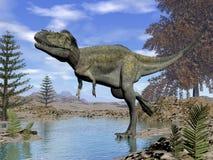 Alioramus dinosaur - 3D render. Alioramus dinosaur walking into the water in the desert by day - 3D render stock illustration