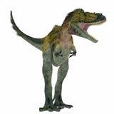 Alioramus dinosaur na bielu Obraz Royalty Free
