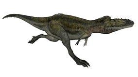 Alioramus dinosaur running - 3D render. Alioramus dinosaur running isolated in white background - 3D render royalty free illustration