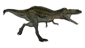 Alioramus dinosaur running - 3D render. Alioramus dinosaur running and roaring isolated in white background - 3D render stock illustration