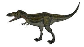 Alioramus dinosaur walking - 3D render. Alioramus dinosaur walking and roaring isolated in white background - 3D render royalty free illustration