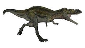 Alioramus dinosauriespring - 3D framför stock illustrationer