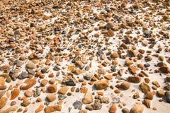 Alise alrededor de piedras del guijarro en el backgound de la playa de la arena Imágenes de archivo libres de regalías