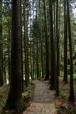 Alishan, πόλη Chiayi, αρχέγονο δάσος της Ταϊβάν Στοκ Εικόνες
