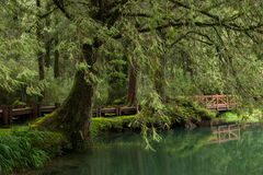 Alishan, πόλη Chiayi, αρχέγονο δάσος της Ταϊβάν Στοκ εικόνες με δικαίωμα ελεύθερης χρήσης