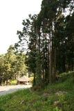 Alishan Image libre de droits