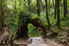 Alishan, Chiayi City, Taiwan primeval forest Stock Photo