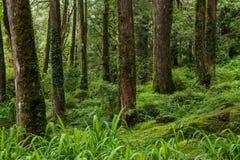 Alishan Chiayi stad, Taiwan urtids- skog Royaltyfri Fotografi