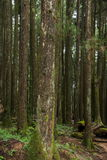 Alishan Chiayi stad, Taiwan urtids- skog Royaltyfri Foto