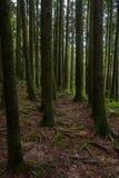 Alishan Chiayi stad, Taiwan urtids- skog Arkivfoton