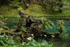Alishan Chiayi stad, Taiwan urtids- skog Fotografering för Bildbyråer