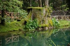 Alishan Chiayi stad, Taiwan urtids- skog Royaltyfria Bilder