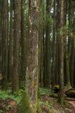 Alishan, città di Chiayi, foresta primigenia di Taiwan Fotografia Stock Libera da Diritti