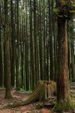 Alishan, città di Chiayi, foresta primigenia di Taiwan Fotografie Stock