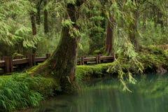Alishan, città di Chiayi, foresta primigenia di Taiwan Immagine Stock