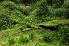 Alishan, ciudad de Chiayi, bosque primitivo de Taiwán foto de archivo