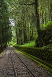Alishan forest railway narrow gauge train Stock Image