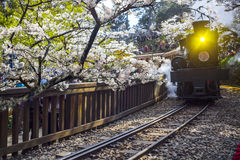 Alishan Forest train Royalty Free Stock Image