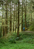 Alishan lasu park rozrywki Zdjęcia Royalty Free