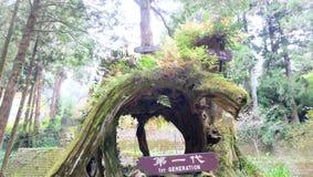 Alishan Nationaal Toneelgebied, 1st, 2de en 3de Generatiebomen Stock Afbeelding