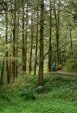 Alishan skognöjesfält Royaltyfria Foton