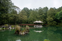 Alishan, ville de Chiayi, soeur Tan de forêt vierge de Taïwan Photos libres de droits