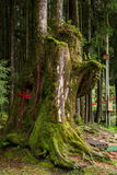Alishan virgin forest tree god Stock Image