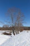 Aliso en un día de invierno soleado Fotos de archivo