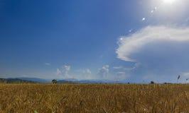 Aliste para cosechar trigo contra el contexto del mountai hermoso Fotografía de archivo