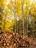 Aliste para el invierno - pila de madera en el bosque negro imágenes de archivo libres de regalías