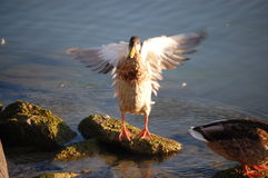Aliste para volar Foto de archivo