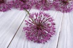 Alium purple flower on a wooden Stock Photo
