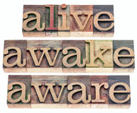 Alive, awake, aware. Words - isolated text in vintage letterpress wood type printing blocks stock photo