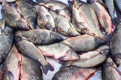 Alive carp for sale Royalty Free Stock Photos