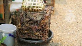 Alive Crab in Laos Local Market,around Vang Vieng stock video