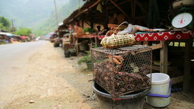 Alive Crab in Laos Local Market,around Vang Vieng stock footage