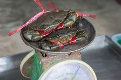 Alive crabs on balance at the market Royalty Free Stock Images