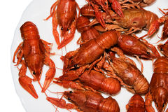 Alive crayfish isolated on white background. Live crayfish closeup, fresh crayfish. Boiled red crayfishes on a white dish. Brotherhood of red crawfish, Boiled Stock Images