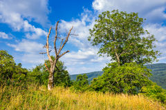 Alive and dead trees on hillside on summer day Stock Photo