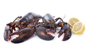 Alive lobsters Royalty Free Stock Photography