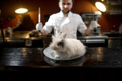 Alive rabbit on the plate with chef cook Stock Image