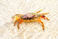 Alive sea food looking at you! Stock Photography