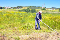 ALJEZUR - MAY 11: Farmer working on his land in an old fashioned way Stock Photo