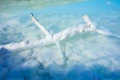 Alkaliczny jezioro i drzewo zostajemy Fotografia Stock