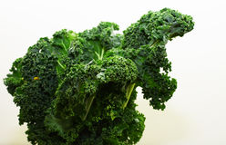 Alkaline, healthy food. Kale leaf on white background. A great view of a batch of fresh kale Stock Images